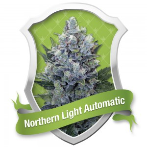 Northern Light Automatic