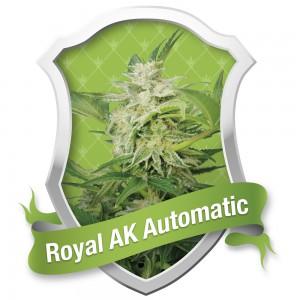 Royal AK Automatic