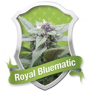 Royal Bluematic