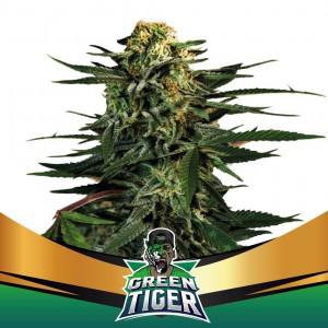 Green Tiger Fast V